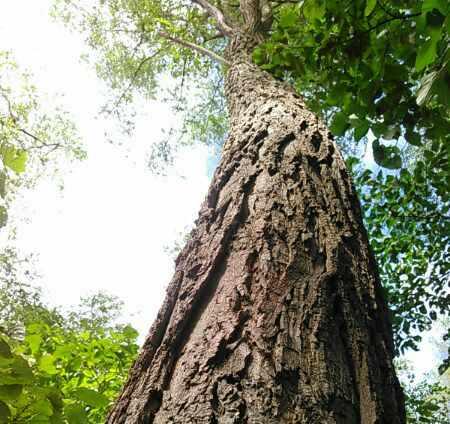 樹木講座~「奥山編」&「針葉樹・常緑樹編」~(日本フィトセラピー協会認定 森林ソムリエ講座)